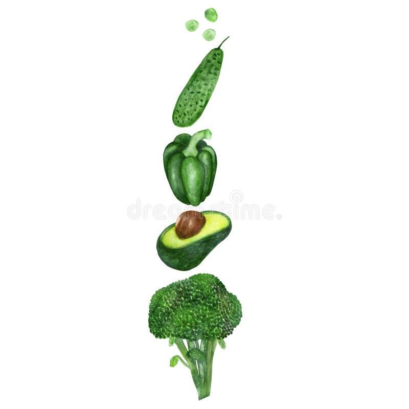 Grupo da aquarela de vegetais verdes isolados no fundo branco Legumes frescos pintados à mão para o desiground bonito do menu oun ilustração stock