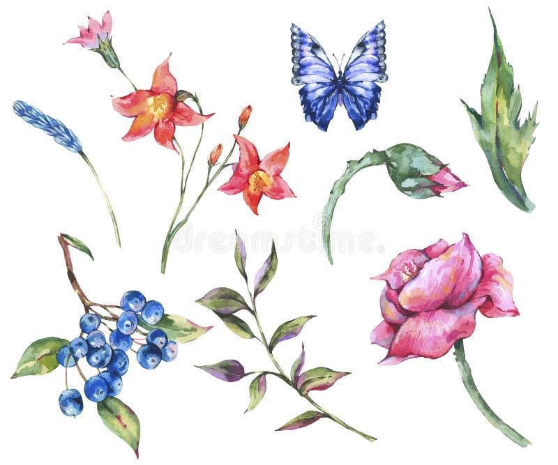 Grupo da aquarela do vintage de flores selvagens, ervas do prado, borboleta, papoila, folhas, galhos, botões ilustração do vetor