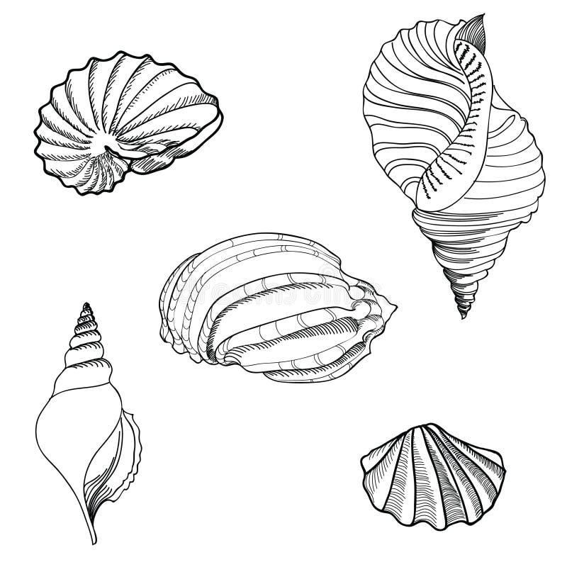 Grupo da areia da concha do mar. verão à moda tirado mão  ilustração royalty free
