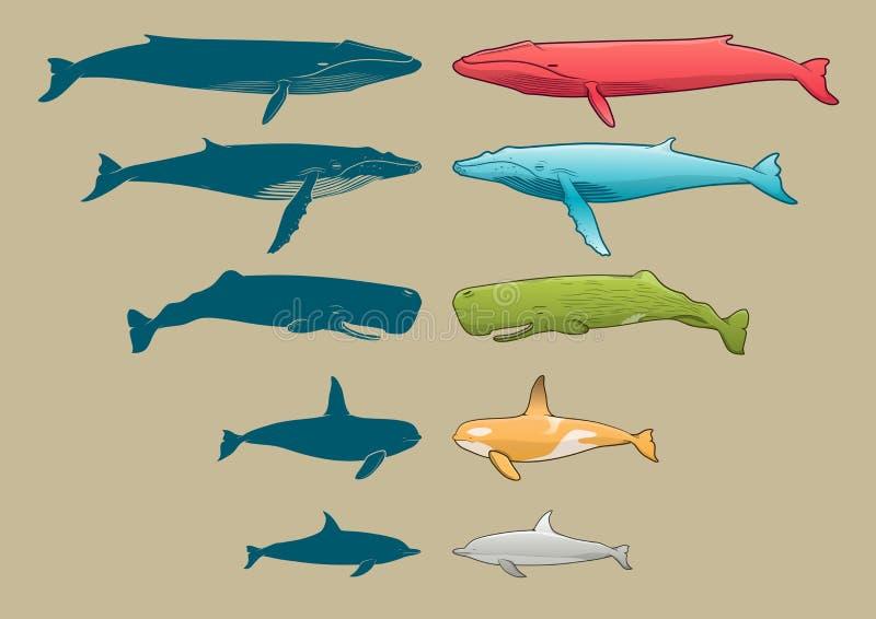 Grupo da baleia e do golfinho fotos de stock