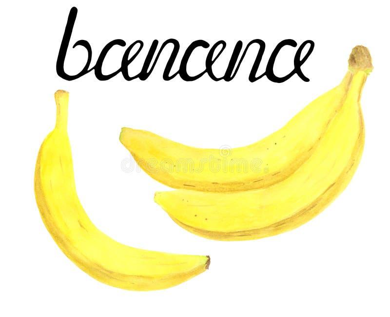 Grupo da banana da aquarela Ilustração de dieta saudável fresca tirada mão do alimento no fundo branco com rotulação da caligrafi ilustração do vetor