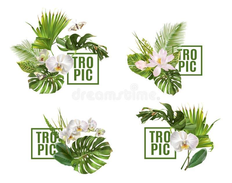 Grupo da bandeira das plantas do trópico ilustração do vetor