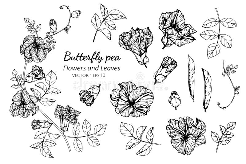 Grupo da coleção de flor e de folhas da ervilha de borboleta que tiram a ilustração ilustração royalty free