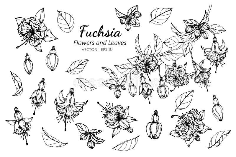 Grupo da coleção de flor fúcsia e de folhas que tiram a ilustração ilustração stock