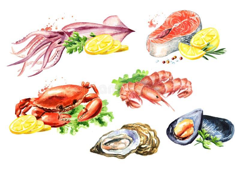 Grupo da composição do marisco com salmões, calamar, caranguejo, mexilhões, ostras, camarão, limão e verdes, ilustração tirada mã ilustração stock