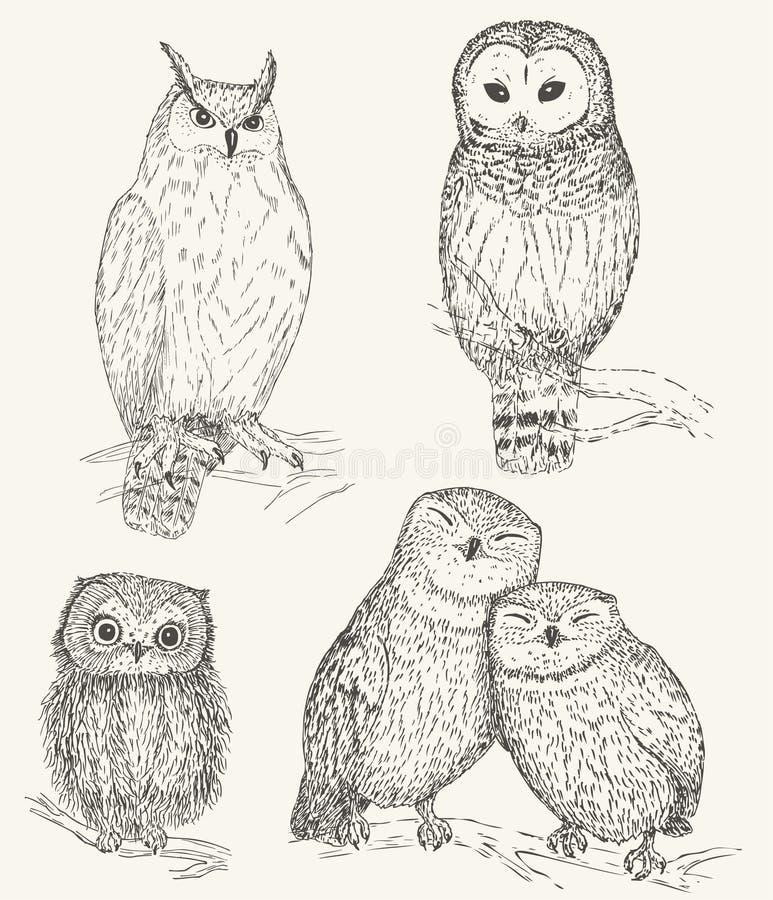 Grupo da coruja ilustração royalty free