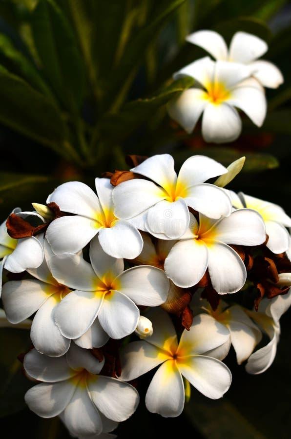 Grupo da flor imagem de stock