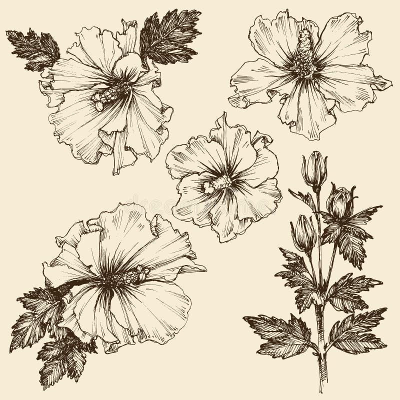 Grupo da flor do hibiscus ilustração stock