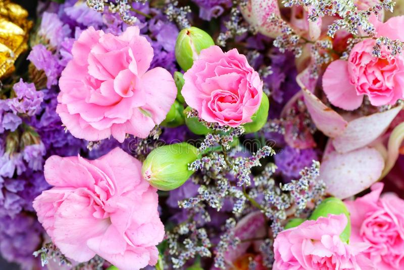Grupo da flor, região cor-de-rosa, amarela, verde, roxa pastel para o fundo, beleza, flor fotos de stock royalty free