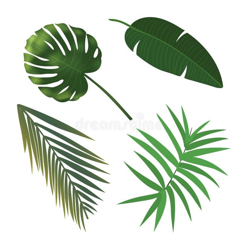 Grupo da folha da planta tropical Folhas de palmeira realísticas ilustração royalty free