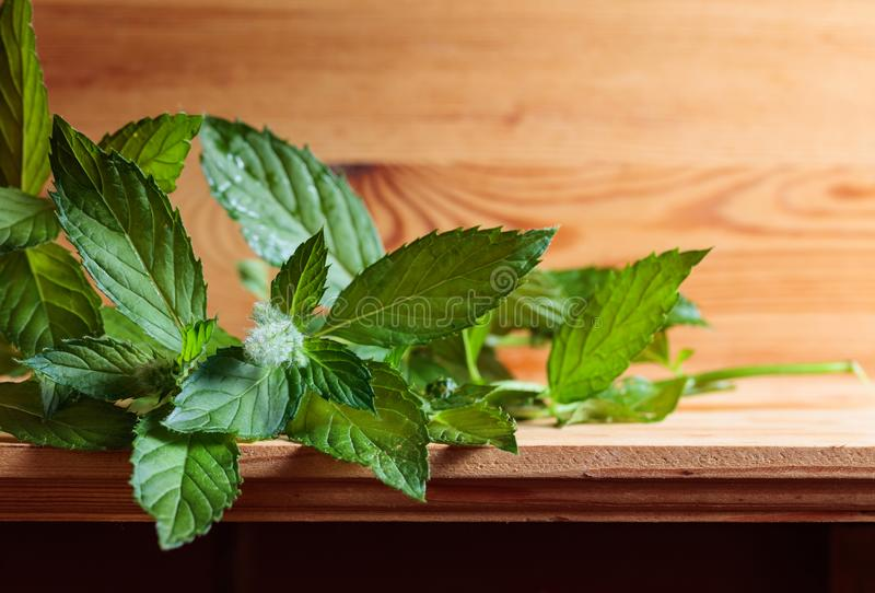 Grupo da folha verde fresca da hortelã fotografia de stock royalty free