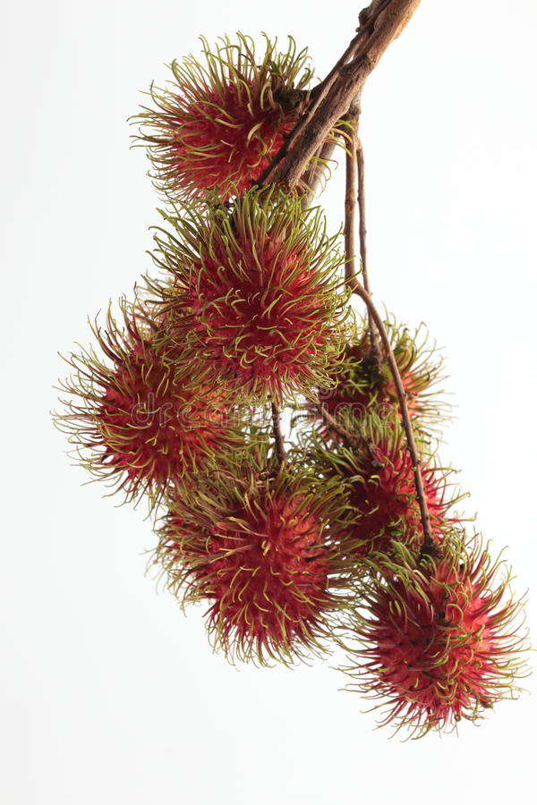 Grupo da fruta do Rambutan foto de stock royalty free