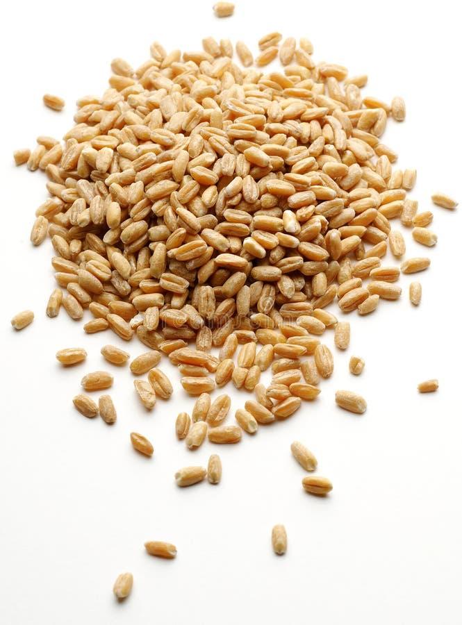 Grupo da grão do trigo   imagens de stock
