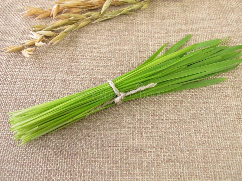 Grupo da grama de aveia verde para o batido foto de stock