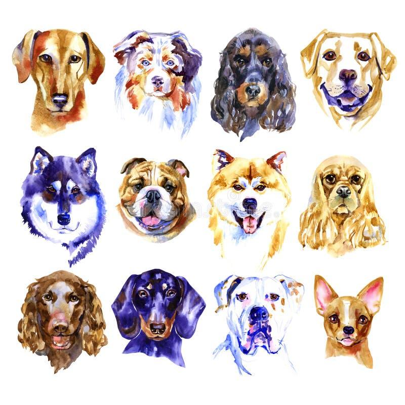 Grupo da ilustração da aquarela de cães isolados no fundo branco ilustração royalty free