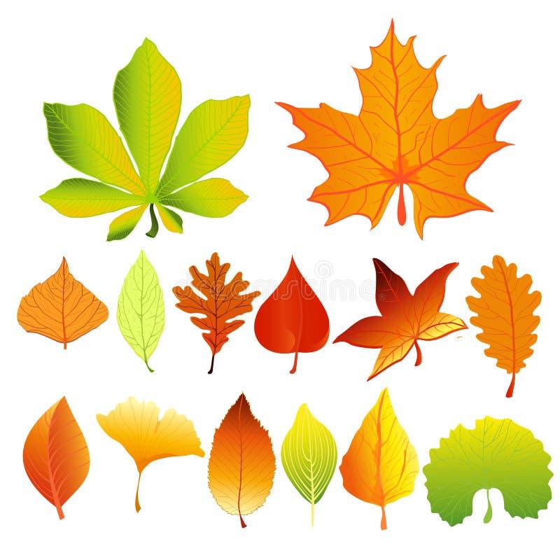 Grupo da ilustração do vetor de cores e de formas diferentes coloridas e brilhantes das folhas de outono no estilo liso dos desen ilustração do vetor