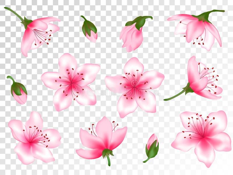 Grupo da ilustração do vetor da flor da árvore da flor da mola ilustração royalty free