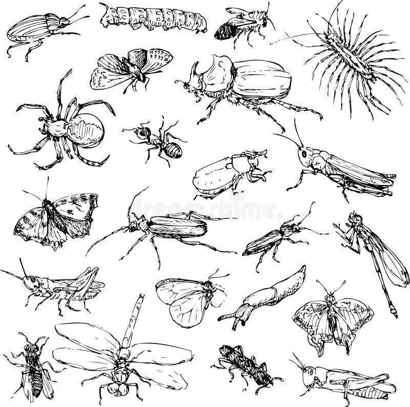 Grupo da lápis insetos do desenho ilustração do vetor