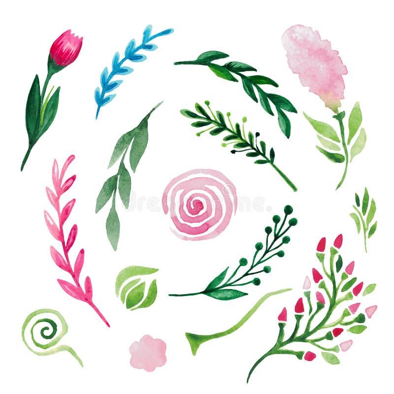 Grupo da mola de folhas dos ramos das flores dos elementos da planta no fundo isolado branco ilustração stock