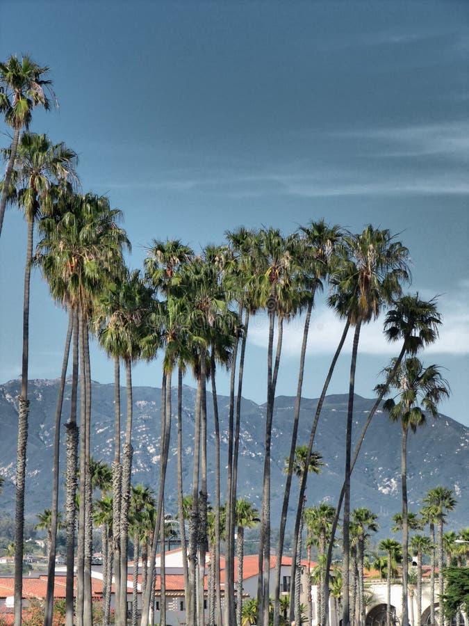 Grupo da palma em Santa Barbara, Califórnia - céu tormentoso fotos de stock royalty free
