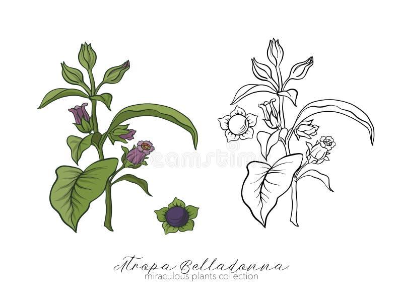 Grupo da planta da beladona Illus conservado em estoque ajustado colorido e do esboço do vetor ilustração royalty free