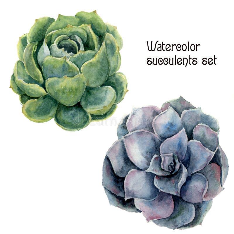 Grupo da planta carnuda da aquarela Ilustração floral pintado à mão com o cacto verde e violeta isolado no fundo branco IL botâni ilustração stock