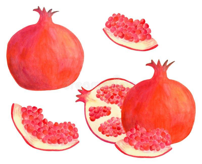Grupo da rom? da aquarela Ilustração vermelha tirada mão do fruto isolada no fundo branco para o projeto de pacote do alimento, d ilustração royalty free