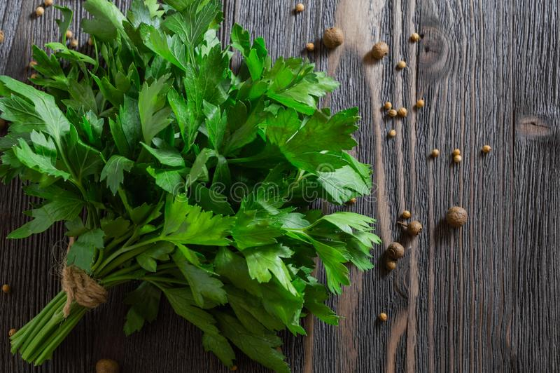 Grupo da salsa e de especiarias frescas no fundo de madeira escuro fotos de stock royalty free