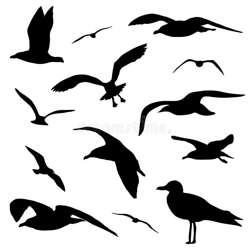Grupo da silhueta da gaivota isolado no vetor branco do fundo ilustração royalty free