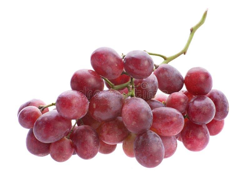 Grupo da uva vermelha foto de stock royalty free