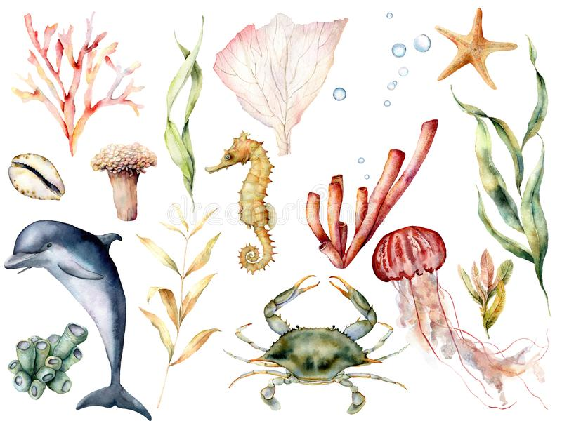 Grupo da vida marinha da aquarela Recife de corais pintado à mão, golfinho, caranguejo, cavalo marinho, medusa, estrela do mar e  foto de stock royalty free