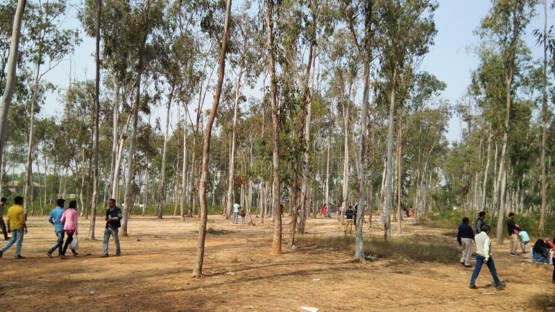 grupo das árvores fotos de stock