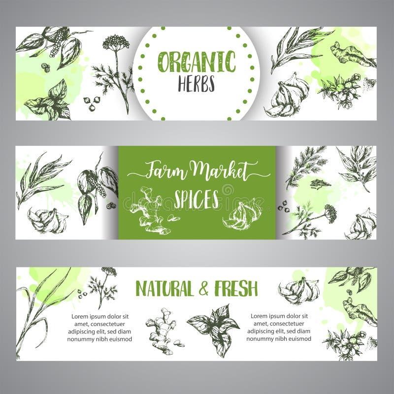 Grupo das bandeiras das especiarias e das ervas Esboço com as plantas tiradas mão Cartaz orgânico natural da especiaria da ilustr ilustração royalty free