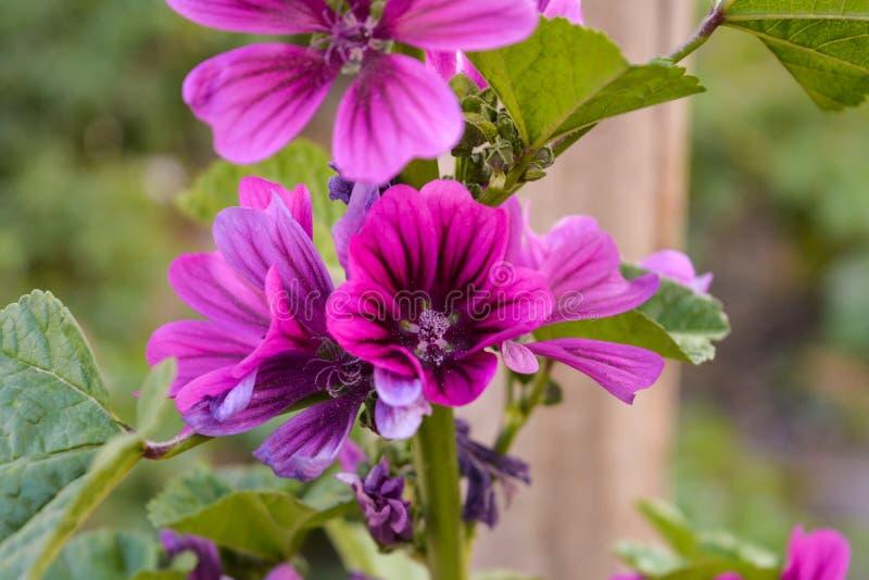Grupo das flores selvagens violetas imagem de stock