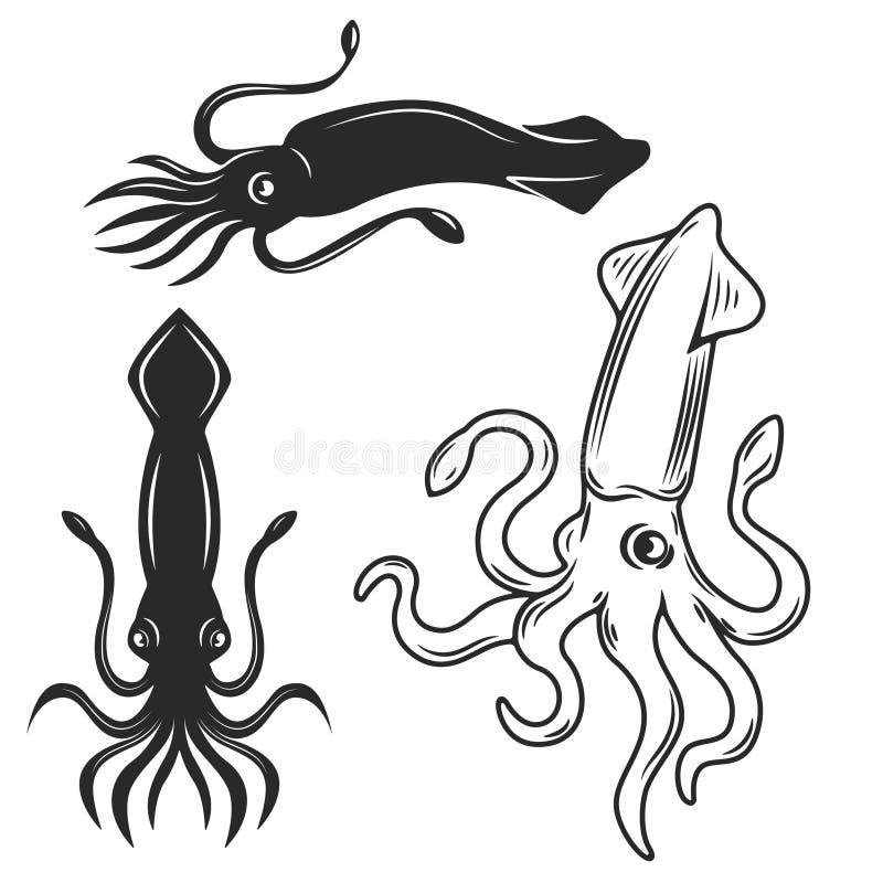 Grupo das ilustrações do calamar isoladas no fundo branco des ilustração stock