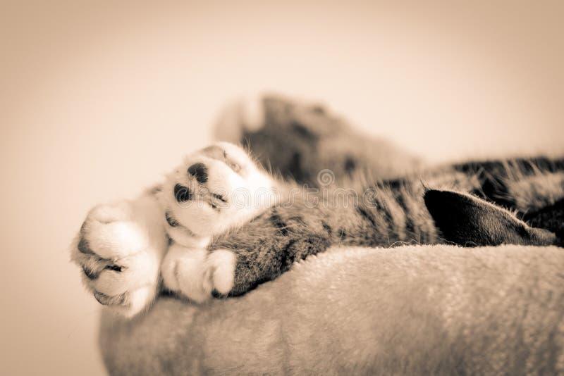 Grupo das patas dos gatos imagem de stock royalty free