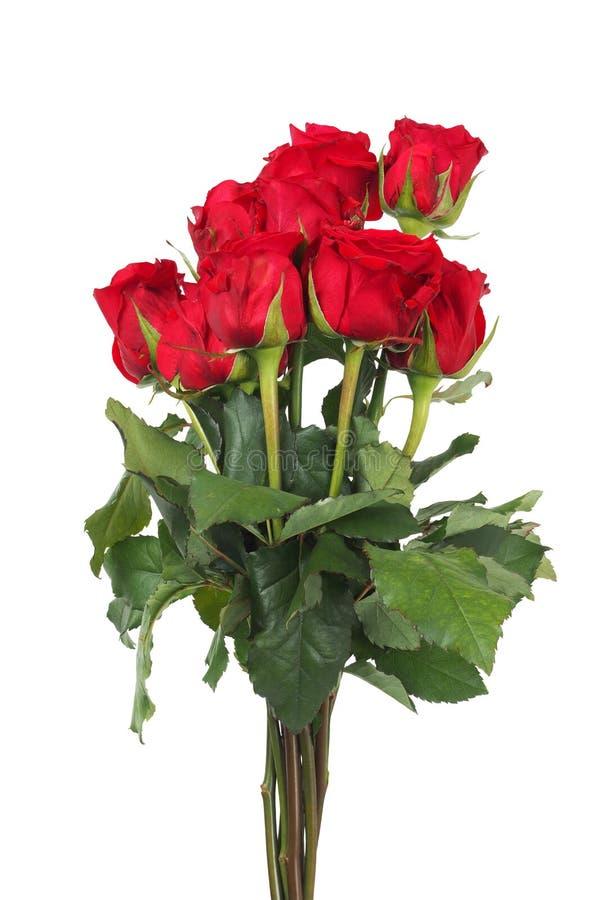Grupo das rosas fotografia de stock royalty free