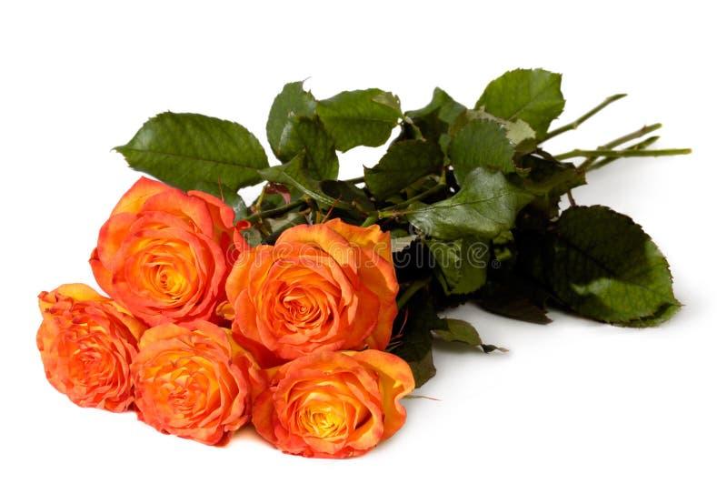 Grupo das rosas imagens de stock royalty free