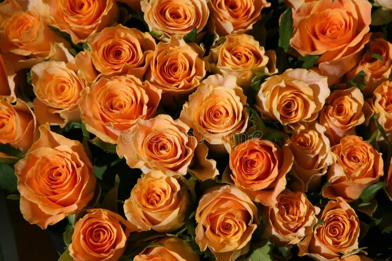 Grupo das rosas foto de stock