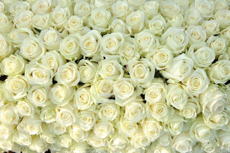 Grupo das rosas brancas, decorações wedding foto de stock royalty free