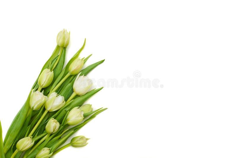 Grupo das tulipas brancas sobre a configuração do plano fotografia de stock royalty free