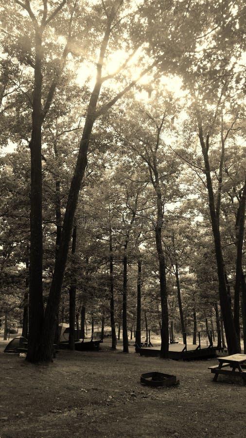 Grupo de árvores imagem de stock royalty free