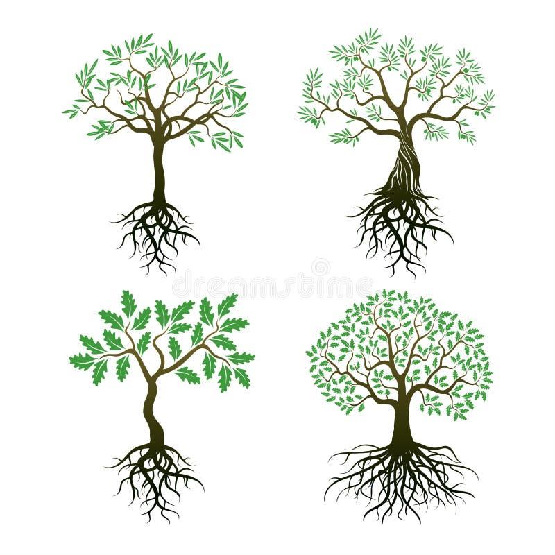 Grupo de árvores e de raizes ilustração stock