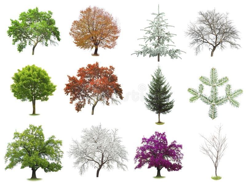 Grupo de árvores isoladas fotos de stock