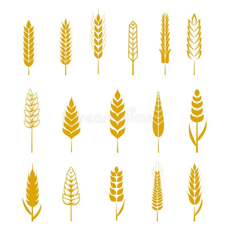 Grupo de ícones das orelhas do trigo e de elementos simples do projeto para a cerveja ilustração royalty free
