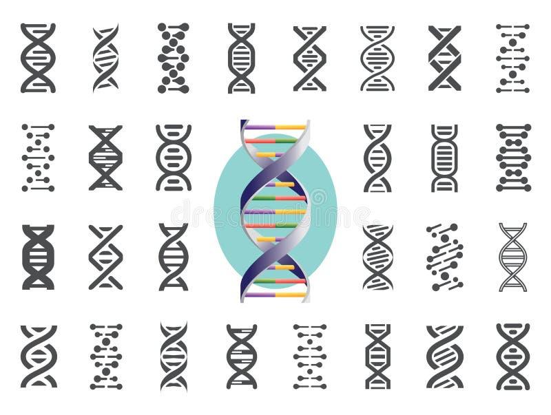Grupo de ícones do ADN Variação genética humana Ilustração do vetor ilustração stock