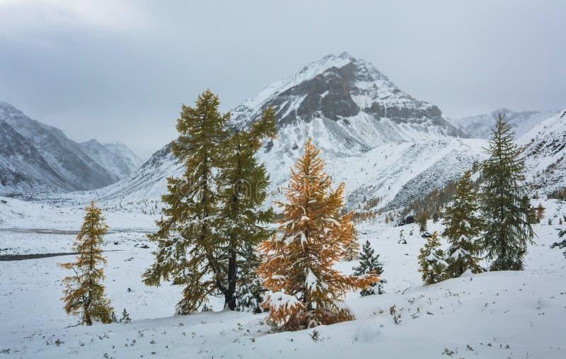 Grupo de Ð de árboles en un fondo de montañas foto de archivo