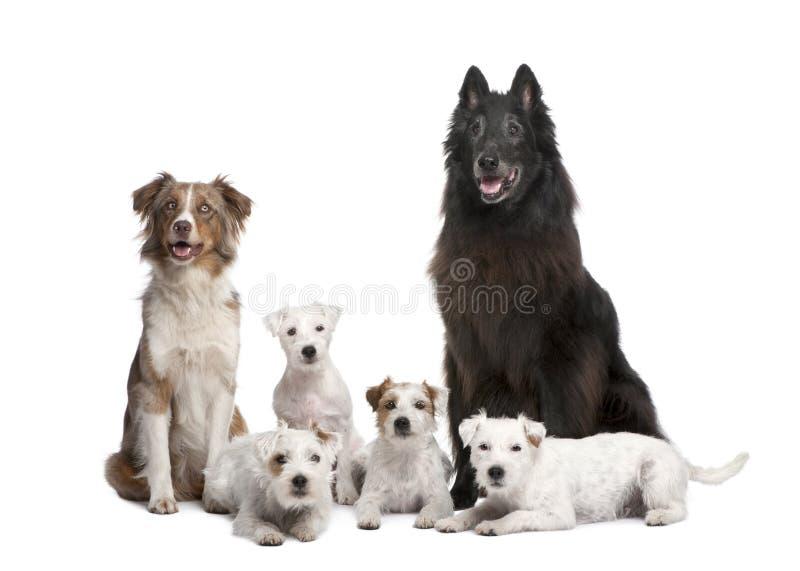 Grupo de 5 perros foto de archivo
