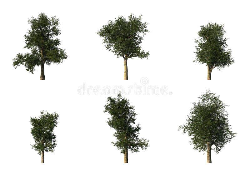Grupo de 6 árboles del platanus del CG stock de ilustración