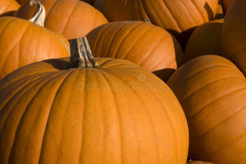 Grupo de abóboras de Halloween imagens de stock